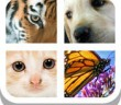 Close Up Animals 2015 - All Answers and Solutions
